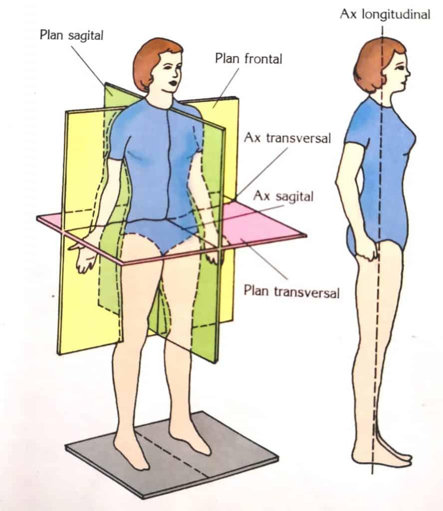 planuri anatomice