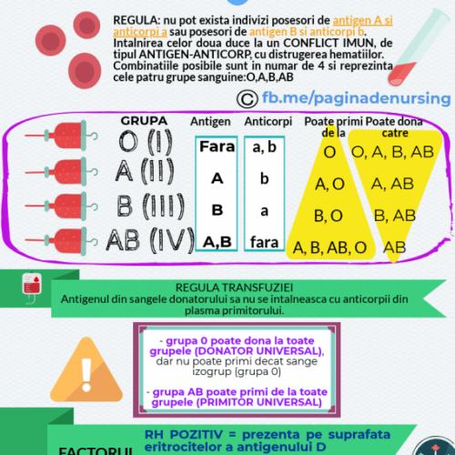 grupe de sange transfuzia pagina de nursing