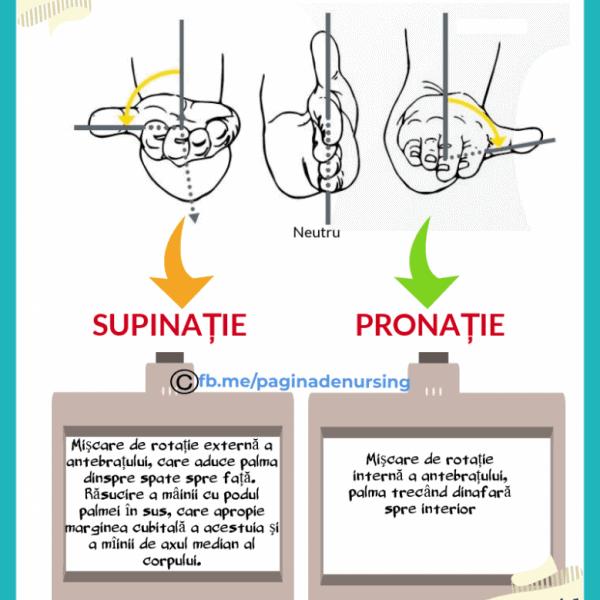 supinatie pronatie pagina de nursing