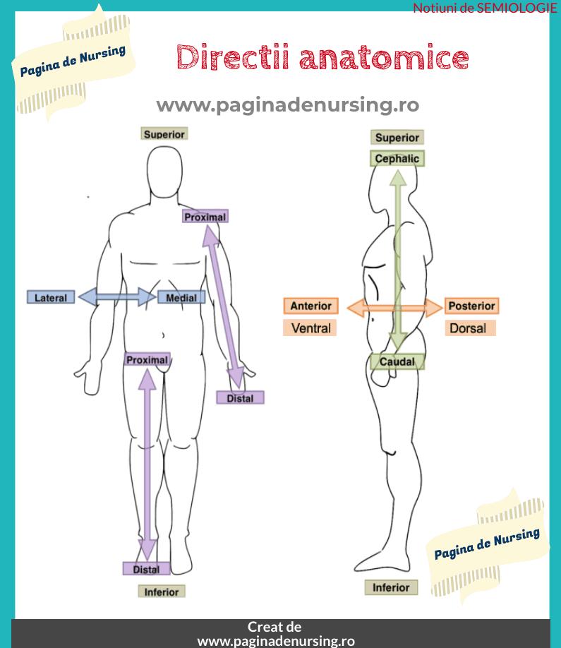directii anatomice