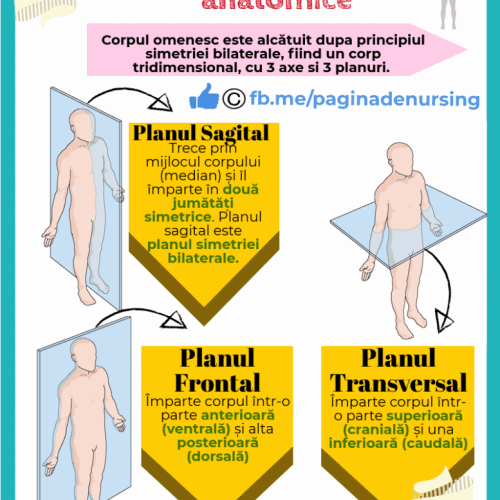 planuri si raporturi anatomice pagina de nursing
