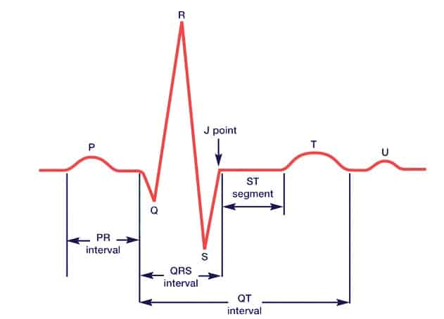 EKG SEGMENTE