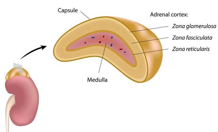 Terapia hormonală pentru tratarea cancerului de prostată