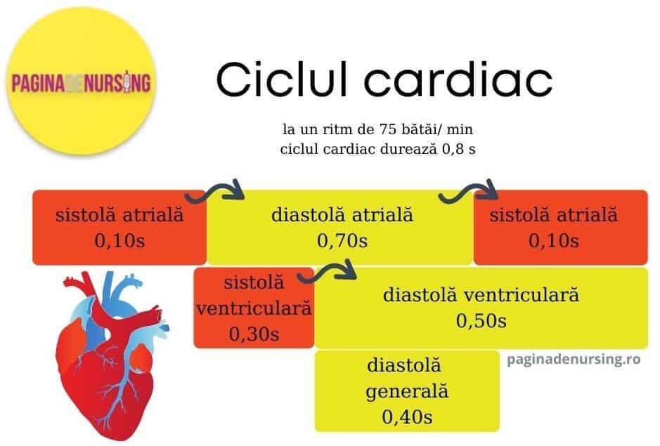 ciclul cardiac sistemul circulator aparat cardiovascular paginadenursing