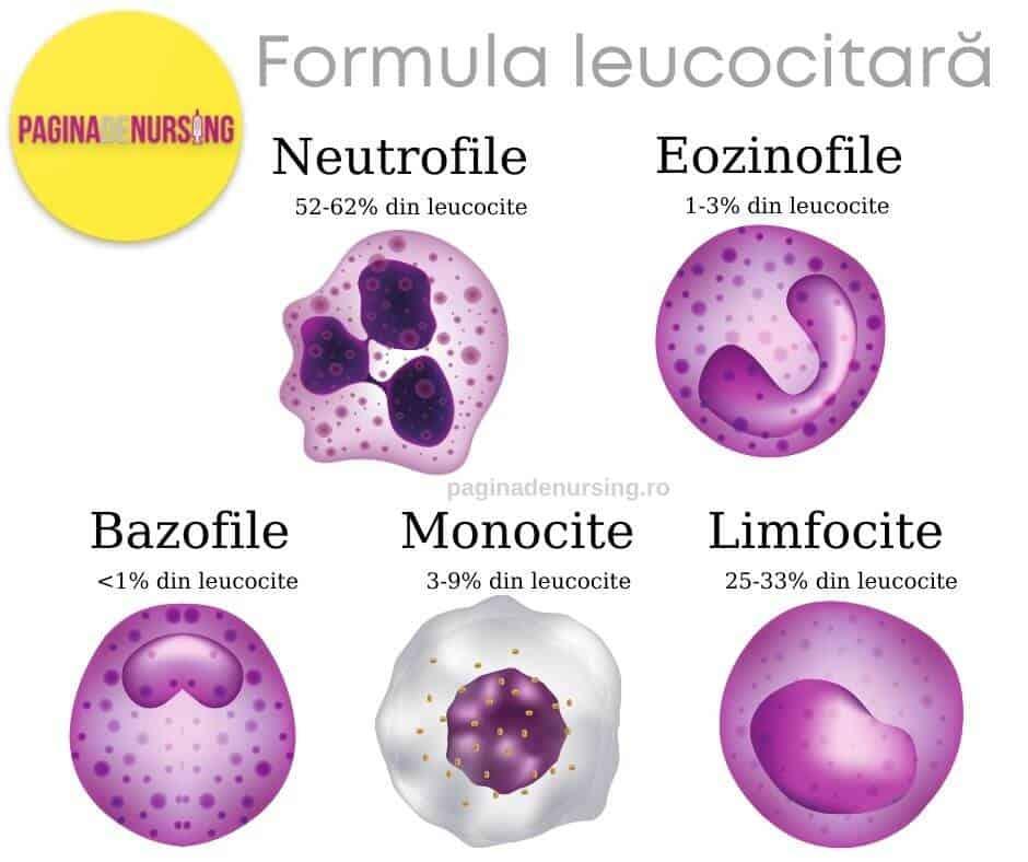 formula leucocitara sangele sistemul circulator aparat cardiovascular paginadenursing