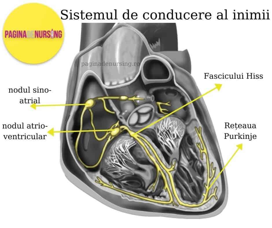 sistemul electric al inimii sistemul de conducere pagina de nursing nodul sinoatrial atrioventricular fascicul hiss