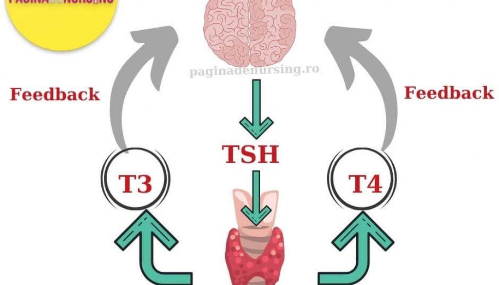 glanda tiroida pagina de nursing tsh t3 t4
