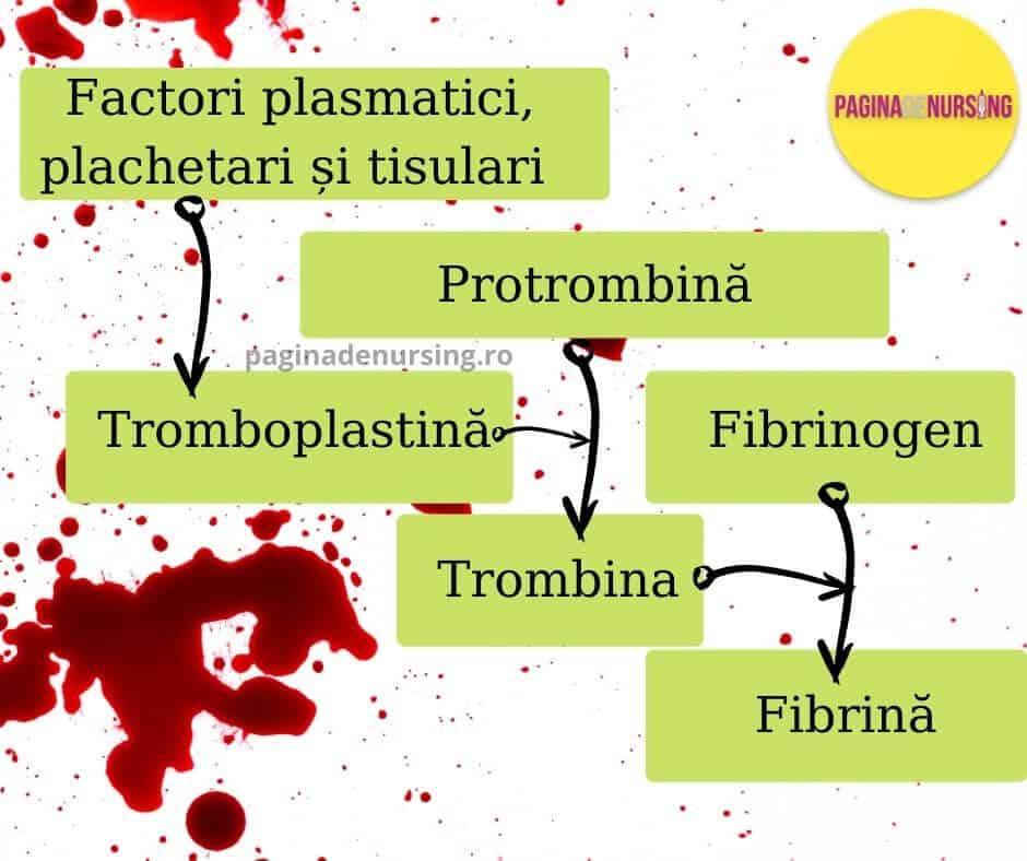 hemostaza etape pagina de nursing amg