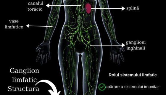 sistemul limfatic limfa paginadenursing